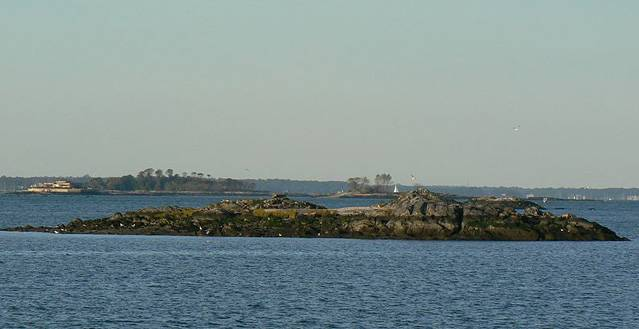 800px-Rat_island