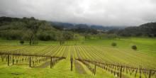 scenic-vineyards-at-joseph-phelps-winery-e1298657820698