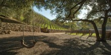 Moraga-Vineyards6