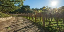 Moraga-Vineyards7