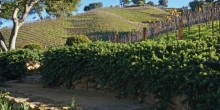 Moraga-Vineyards8