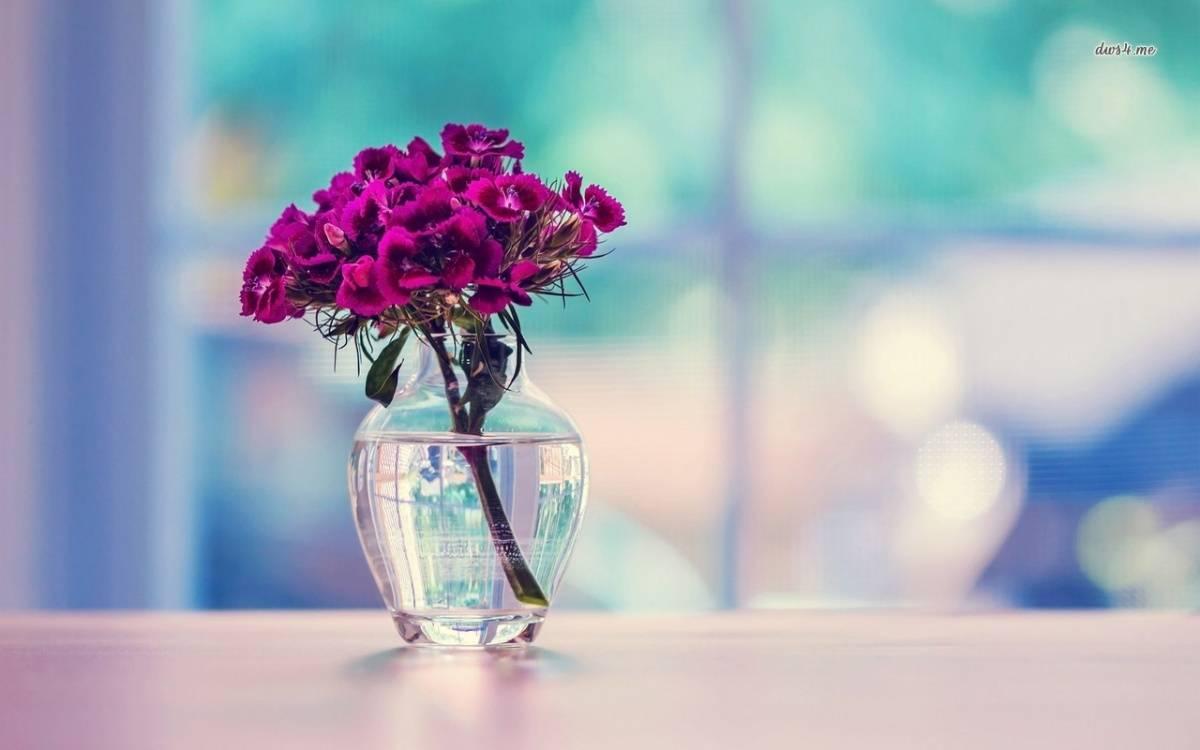 Dianthus in a Vase
