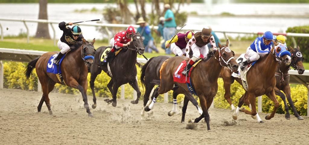 Del Mar Horses (1)