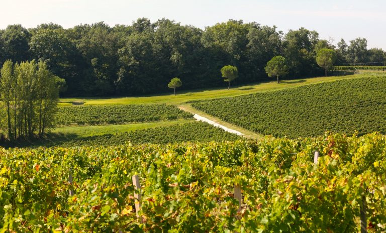 World's Most Resplendent Vineyard Destinations