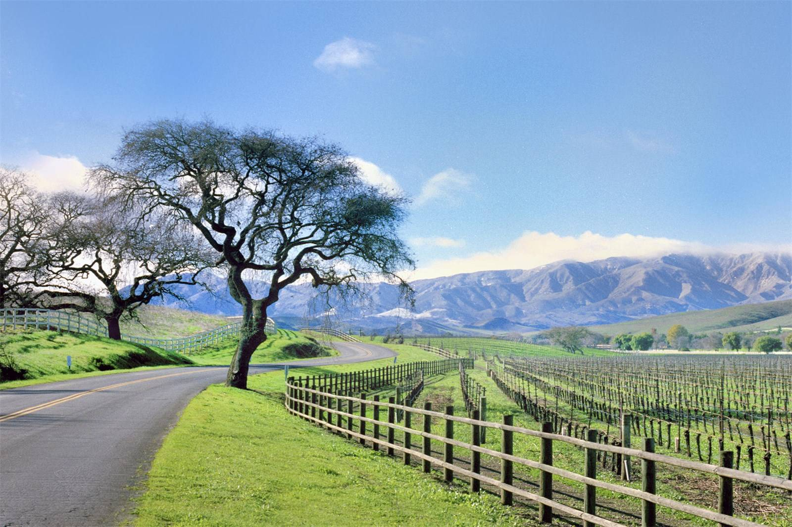 Vineyards And Wine Country Estates