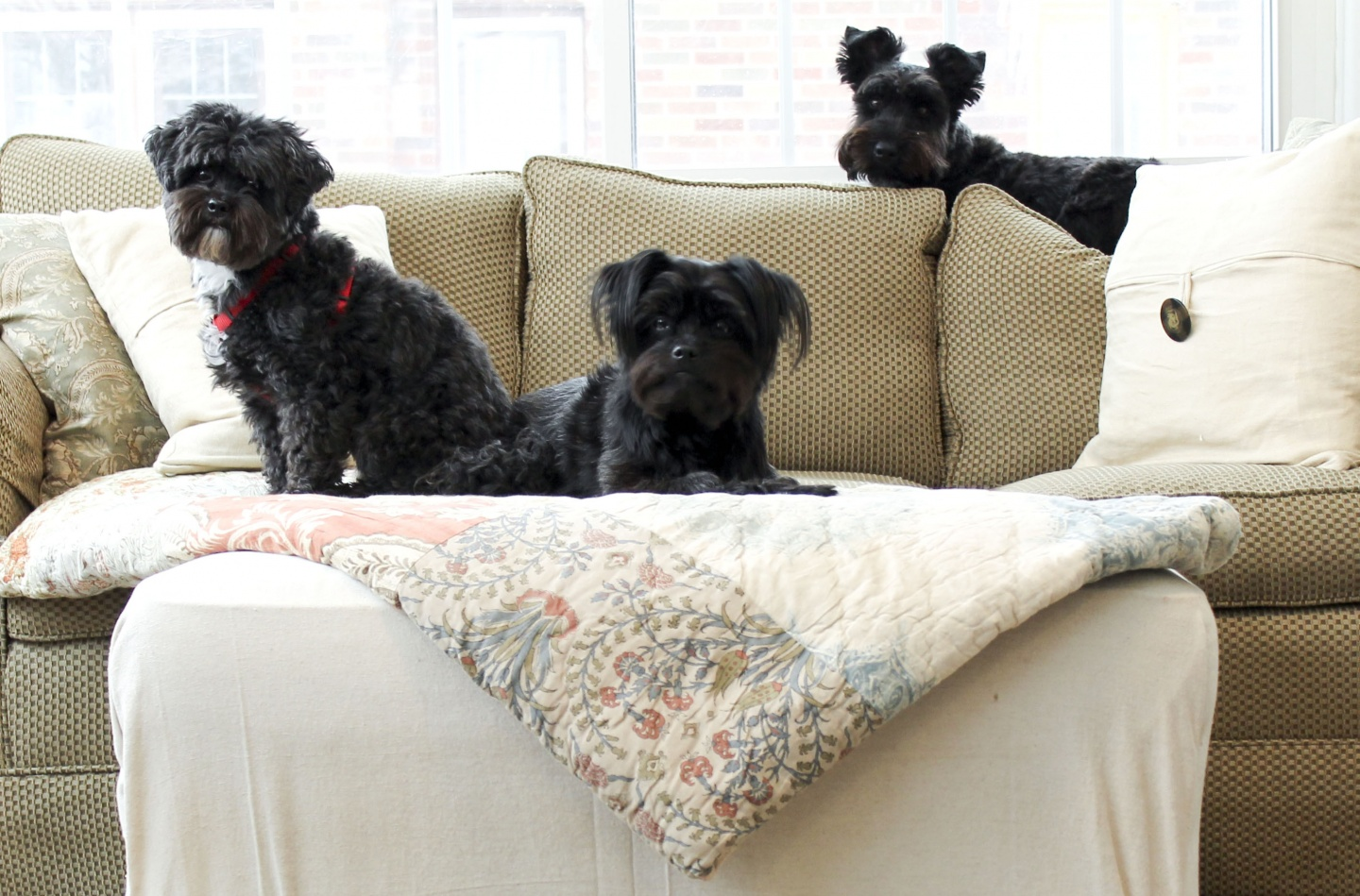 lovely best dog friendly furniture | 5 Pet-Friendly Furniture Pieces
