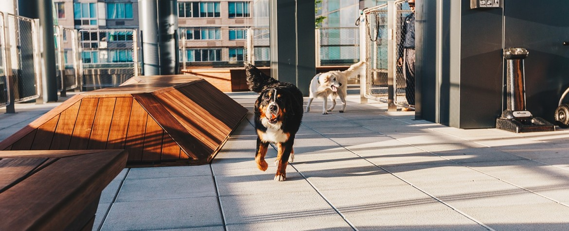 Four Developments Every Pet Owner Will Love
