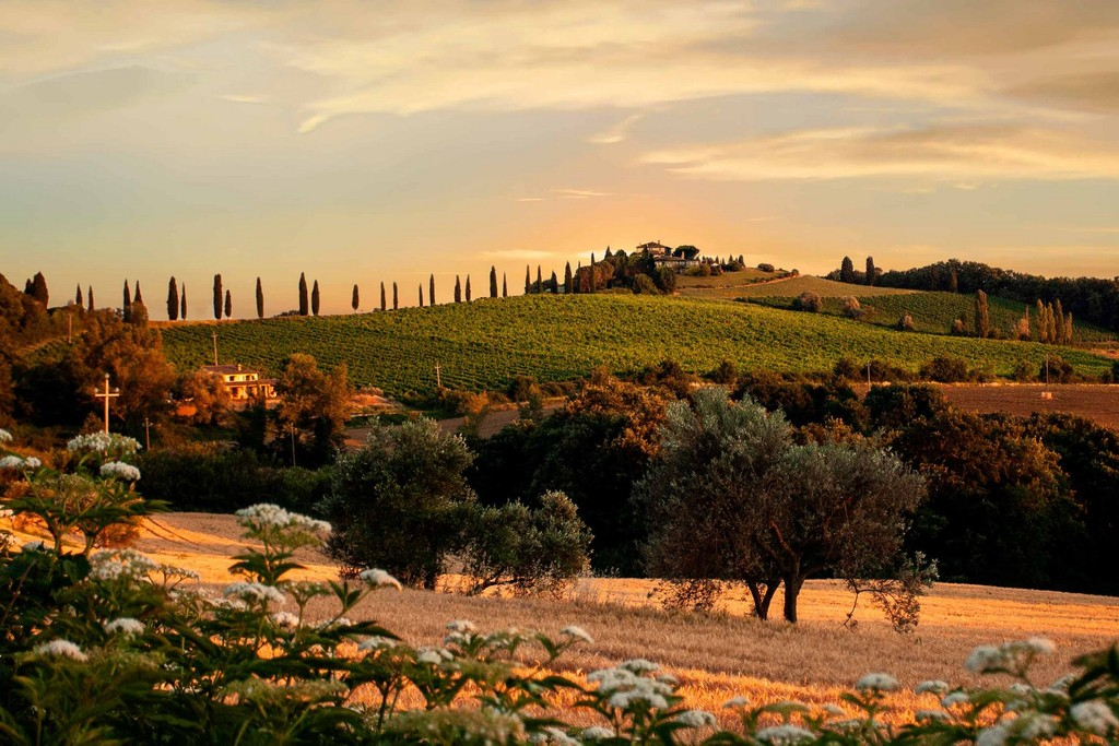 Vineyard Homes