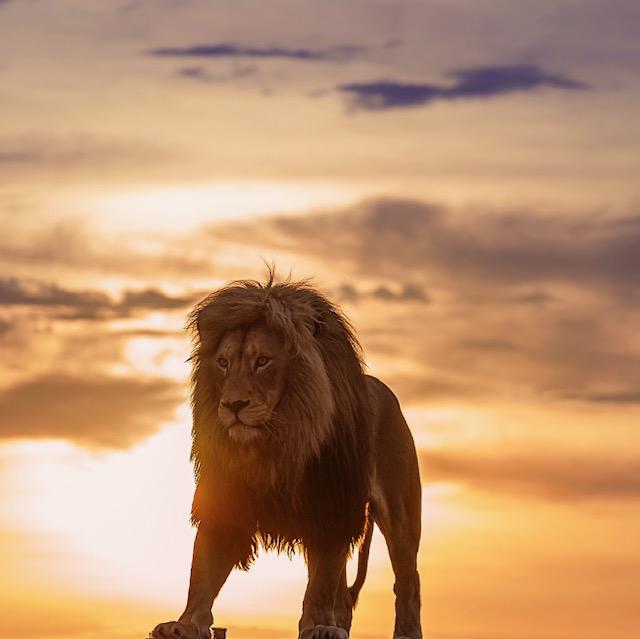 KC Martin - lion blog oct 2020 2